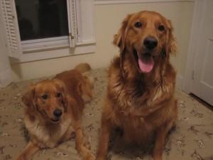bonnie and briscoe